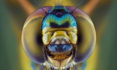 Juxtapoz Magazine - In Your Face: Extreme Close-ups of Insects