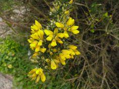 #rome #ortobotanico #flowers #yellow #biodiversity