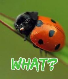 What the heck? - Created with BeFunky Photo Editor Cute Funny Pics, The Funny, Cute Pictures, Funny Animals, Cute Animals, Burst Out Laughing, Garden Animals, Animal Facts, Meeting New People
