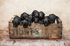 A crate of love: The pups pile on top of each other in a line as they pose for the family pictures