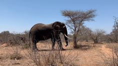 YouTube Gentle Giant, All Inclusive Resorts, Safari, Elephant, Africa, Explore, Youtube, Photography, Life