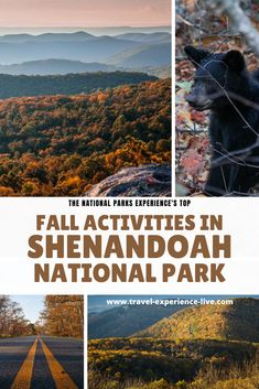 Fun Things to Do in Shenandoah National Park in the Fall Stuff To Do, Things To Do, Shenandoah National Park, Natural Scenery, Autumn Activities, National Parks, Fall, Things To Make, Autumn
