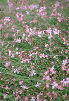 Hazel Sillver picks her favourite billowy plants to give the garden a beautiful hazy tapestry