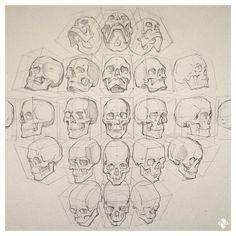 Head/skull reference