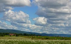 Fields of Queen Anne's lace & bales of hay on a farm near the Catoctin Mountain Park. Photo by Kai Hagen Photography