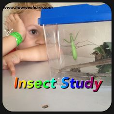 An insect study on a Praying Mantis - very cool science observation!