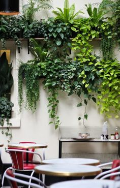 do you want to decorate it? the best way to that is to create a vertical garden wall inside your home. A vertical garden wall, also called a living wall, is a collection of… Continue Reading → Vertical Garden Plants, Vertical Gardens, Vertical Planter, Succulent Plants, Succulent Wall, Herbs Garden, Succulent Terrarium, Succulents Garden, Cactus Plants