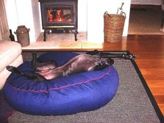 The bed arrived on Friday! took Aston, our German Shorthaired Pointer, a while to get used to the feel but now we can't get him out of it Pet Beds, Dog Bed, German Shorthaired Pointer, Large Dogs, Kara, Pointers, Bean Bag Chair, Fill, Future