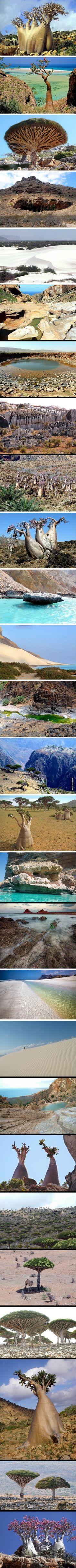 Alien Looking Places on Earth- Socotra Island, Yemen