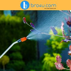 Pest control at Bro4u is the easiest way to avail the pest control service in Hyderabad at your comfort. #bro4u #pest #control #services #hyderabad #home_services