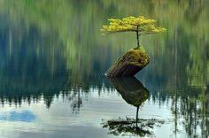 Гармония, спокойствие, отрешенность, медитация, прохлада, свежесть, самодостаточность, отражение.
