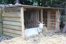 Goat Housing PALLETS Lolly lazing in her new shelter- I hope she likes it? Goat Shelter, Animal Shelter, Goat Playground, Goat Shed, Goat Barn, Raising Goats, Goat Farming, Baby Goats, Backyard Farming