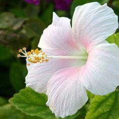 Pretty Pretty flowers