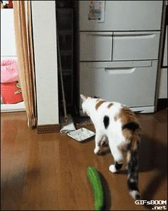 I gently tried to place the cucumber to the back of the cat: ¬ Nekome ...