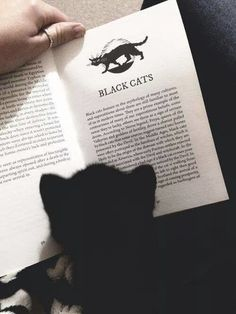 History Lesson - Adorable Black Cats That Are Expertly Celebrating Halloween - Photos
