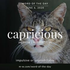 'Capricious' is the #wordoftheday . #language #languagelearning #merriamwebster #dictionary