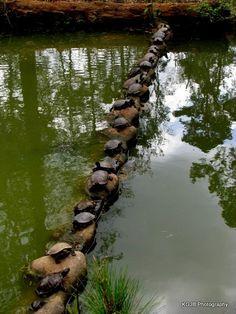 too many turtles!