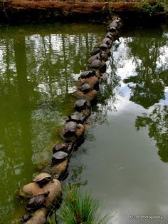 Turtles!!!!! Snakes & Turtles  (CTS)