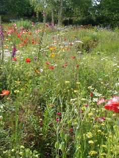 There would be a gorgeous wild flower patch leading to the edge of the woods. Rustic Bouquet, Rustic Flowers, Wild Flowers, Back Gardens, Small Gardens, Meadow Garden, Garden Images, Flower Patch, Natural Garden