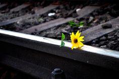 New free stock photo of light nature petals - Stock Photo