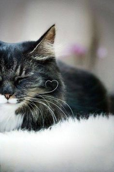 Love the little whisker heart <3