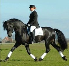 #horse www.stable-mates.com