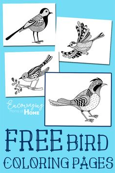 Free Bird Coloring Pages - Free Printable Coloring Pages in Adult Coloring Pages style. Fun for kids and adults!