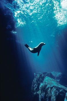 Galapagos, Sea Lion - Tui De Roy