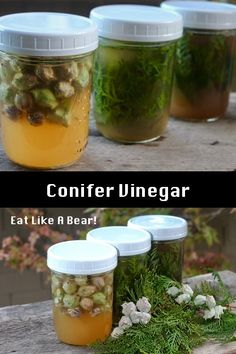 Conifer Vinegar: Infuse Your Apple Cider Vinegar (ACV)  with Trees! Pine, fir, spruce, juniper, cedar, redwood, and more! This is a lot of fun! #applecidervinegar #ACV #foraging #herbs #conifer Wild Edibles, Acv, Apple Cider Vinegar, Emergency Preparedness, Cucumber, Natural Remedies, Pantry, Sauces, Keto Recipes