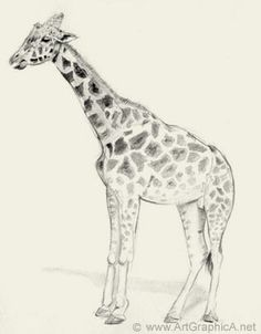 The pin is realistic in its details. But also the artist made the top of the picture darker, adding more shading making that seem more real then the pale bottom. This gives contrast and also a sense of heavy ness to the giraffe