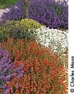 Here is a list of 52 perennials that will grow fine in dry conditions. However, no plant can survive without any moisture. Even if they are tolerant of dry soil, make sure to keep all plants well-watered until they're fully established in your garden. And they'll do better with a deep watering when you see them beginning to wilt.