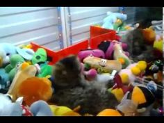 In Russia, Arcade Claw Machines Come With Real Live Cats