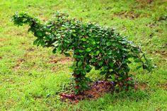 Obrázkové výsledky pre: topiary trimming