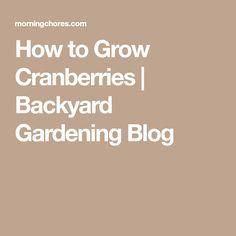 How to Grow Cranberries | Backyard Gardening Blog