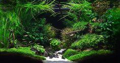 Blog sur l'aquariophilie, le betta splendens, combattant du siam. Amis des aquariums vous trouverez ici un mine d'informations.