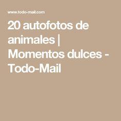 20 autofotos de animales | Momentos dulces - Todo-Mail