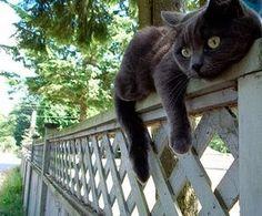 これより面白い猫画像ってあるの?【おもしろかわいい笑顔になる可愛い爆笑ぬこ猫まとめ】\(^_^)/リラックス