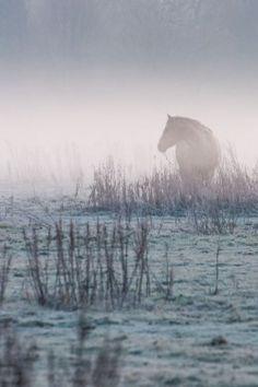 Misty tones by Stefan Staal