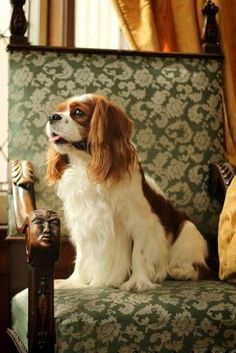All the things we all adore about the Energetic Cavalier King Charles Spaniel Puppies I Love Dogs, Puppy Love, Cute Dogs, Dressage, Cavalier King Charles Spaniel, The Fox And The Hound, Mundo Animal, Little Dogs, Mans Best Friend