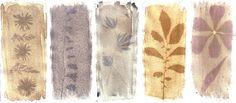Malin Fabbri / 5 photograms: Red oxeye daisy, Bellflower, Garden Lupin, Potato and Tulip / Anthotypes