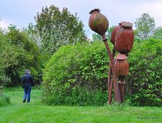 DSC_1056 Shirley Giant Poppy Seed Heads Nature In Art Museum Gloucestershire by rodtuk, via Flickr