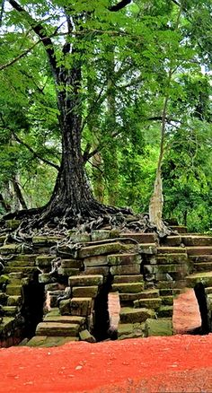 Trees Can Grow In The Air,  A tree that is growing in mid air on a pile of rocks. The roots growing down through the stones to find the earth.   #photo #photography #travel