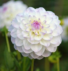 Colhe a alegria das flores da primavera e brinca feliz enquanto é tempo. Sempre haverá os dias em que chegará o inverno e não terás o perfume das flores, nem o sol, nem a vivacidade das cores. Augusto Branco