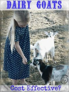 Dairy Goats l Backyard Dairy Goats Costs and Savings l Gues post by Frugal Farm Wife l Homestead Lady (.com)