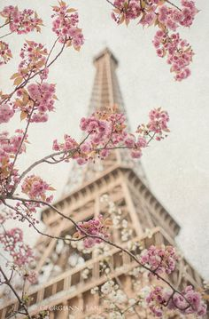 Paris Photography - Eiffel Tower with Cherry Blossoms, Spring in Paris, Travel F. - Paris Photography – Eiffel Tower with Cherry Blossoms, Spring in Paris, Travel Fine Art Photograp - Spring Photography, Paris Photography, Nature Photography, Photography Flowers, Eiffel Tower Photography, Digital Photography, Travel Photography, Funny Photography, Headshot Photography
