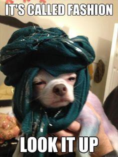 look it up         #loldogs #lolanimals #funnydogs