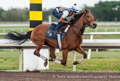 Lady Eli Works Over Belmont's Inner Turf - Horse Racing News Ballston Spa, Horse Profile, Sport Of Kings, Racing News, Horse Racing, Race Horses, 4 Year Olds, Thoroughbred, Kentucky Derby