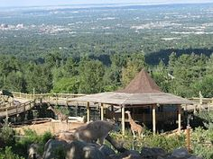 Cheyenne Mountain Zoo in Colorado Springs--we went here sooooo many times when we were stationed at Fort Carson from 1999 to 2003.