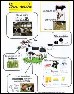La vache panneau infos                                                                                                                                                                                 Plus French Teacher, Teaching French, French Classroom, Kindergarten Lesson Plans, French Lessons, Home Schooling, Worksheets For Kids, Learn French, French Language