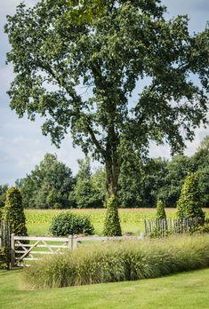Pastorijwoning met oprijlaan | Tuinaanleg Gert Kwanten Terrace Garden, Garden Pool, Garden Landscaping, Garden Landscape Design, Landscape Architecture, Beautiful Dream, Beautiful Gardens, Country Fences, Garden Borders
